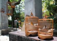 Bird Street