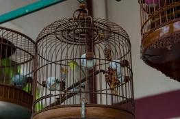 birds-copy